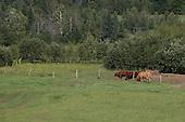 Summer scenic of livestock