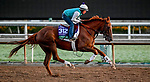 October 27, 2019 : Breeders' Cup Turf entrant United, trained by Richard E. Mandella, exercises in preparation for the Breeders' Cup World Championships at Santa Anita Park in Arcadia, California on October 27, 2019. Scott Serio/Eclipse Sportswire/Breeders' Cup/CSM