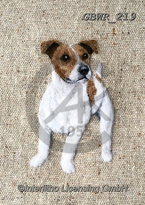 Simon, REALISTIC ANIMALS, REALISTISCHE TIERE, ANIMALES REALISTICOS, innovative, paintings+++++SharonS_SmoothHairedJackRussell,GBWR219,#a#, EVERYDAY dogs,breeds of dog,