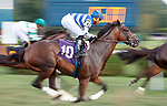 Long Night, first time by, as Bootlegger (no. 2) wins Race 8, Sep. 3, 2018 at the Saratoga Race Course, Saratoga Springs, NY.  Ridden by Luis Reyes, and trained by Rudy Rodriguez, Bootlegger  finished 1/2 length in front of Pocket Player (no. 6).  (Bruce Dudek/Eclipse Sportswire)