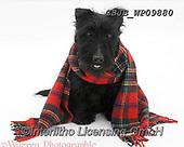 Kim, CHRISTMAS ANIMALS, WEIHNACHTEN TIERE, NAVIDAD ANIMALES, fondless, photos+++++,GBJBWP09880,#xa#