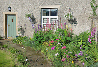 Flowers in a cottage garden, Chipping, Lancashire.