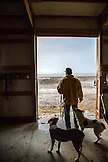 USA, Nevada, Wells, cowboy and wrangler Clay Nannini takes care of the horses on the expansive 900 square mile property in NE Nevada, Mustang Monument, A sustainable luxury eco friendly resort and preserve for wild horses, Saving America's Mustangs Foundation