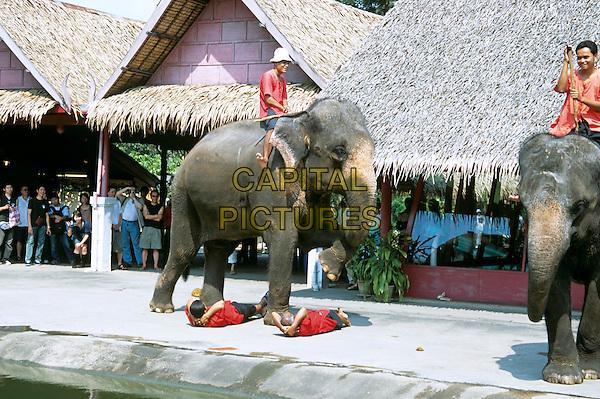 Elephant stepping over people on ground, Riverside Rose Garden, Sampran, Nakorn Pathom, near Bangkok, Thailand