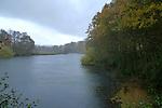 England.; Surrey,Winkworth Arboretum