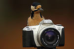 Birds taking photos by Phil Gould