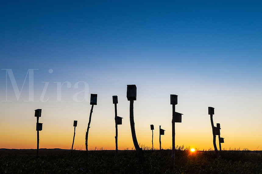 Birdhouses in a salt marsh at sunrise, Sandwich, Cape Cod, Massachusetts, USA
