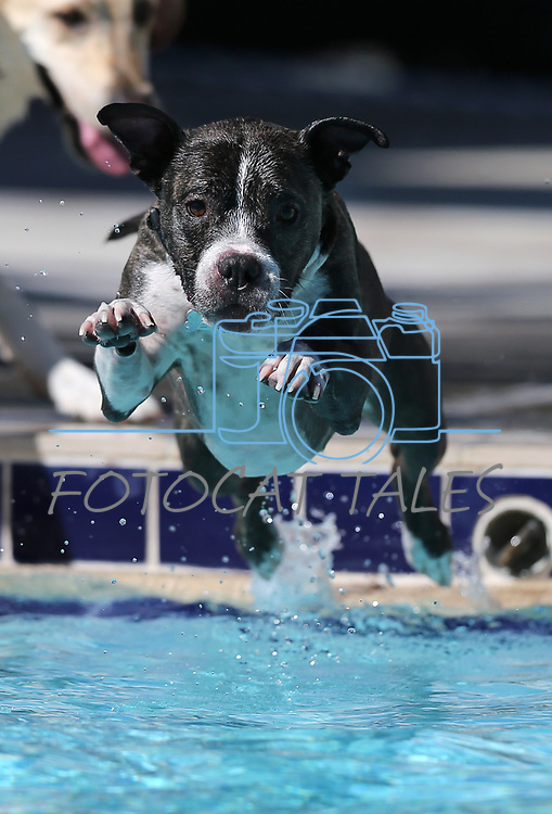 Mac plays at the 9th annual Pooch Plunge at the Carson City Aquatics Center in Carson City, Nev., on Saturday, Sept. 23, 2017. The event is a fundraiser for Carson Animal Services Initiative which supports the Nevada Humane Society in Carson City. <br />