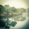 Oak trees in morning fog reflecting on the surface of a lake.