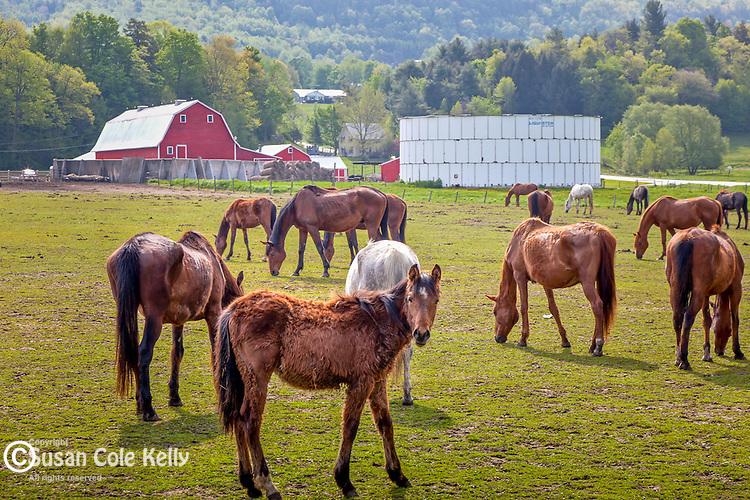Horse farm, Hinesburg, VT