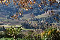 South Africa,  Fall Scenery near Stellenbosch.