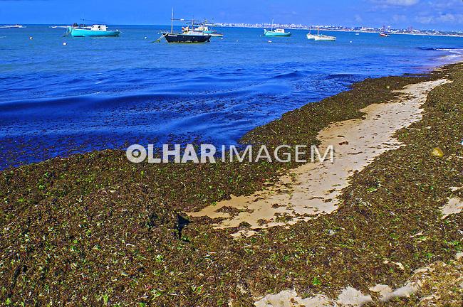 Algas na Praia de Itapua. Salvador. Bahia. 2010. Foto de Marcia Rebello.