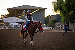 OCT 25: Breeders' Cup Sprint entrant Landeskog, trained by Doug F. O'Neill, at Santa Anita Park in Arcadia, California on Oct 25, 2019. Evers/Eclipse Sportswire/Breeders' Cup