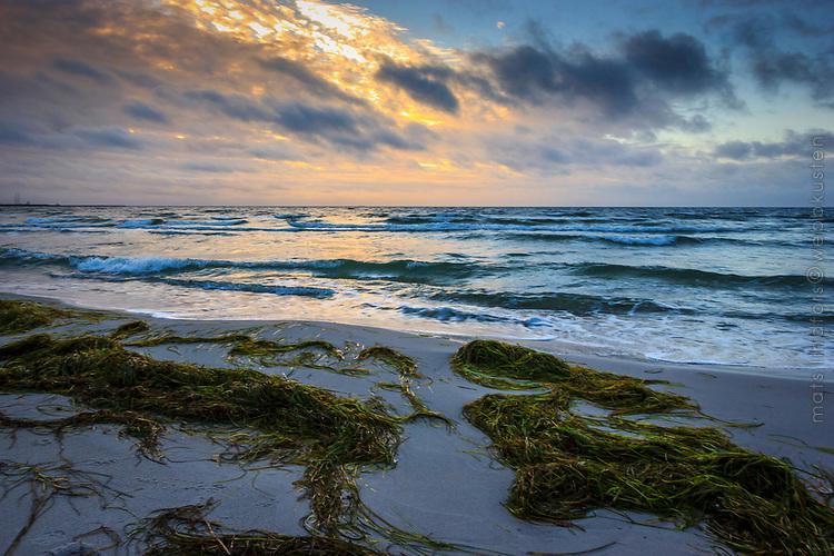 Vågor mot en havsstrand med uppspolad tång vid Skanör i Skåne
