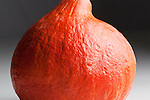 Golden Hubbard Squash, close up, dark background.