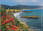 FB 382, Ano Nuevo State Park, paintbrush, Monterey Bay, 5x7 postcard