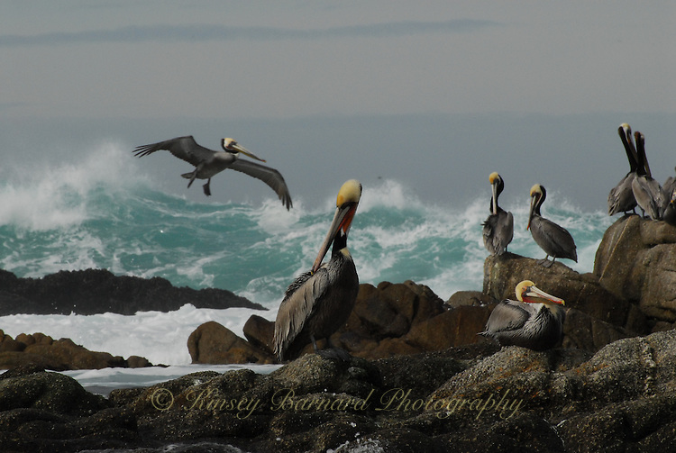 &quot;COMMUNITY&quot;<br />
