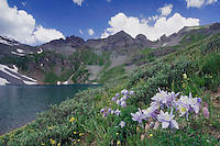 Clear Lake with wildflowers in alpine meadow, Blue Columbine,Colorado Columbine,Aquilegia coerulea, Ouray, San Juan Mountains, Rocky Mountains, Colorado, USA, July 2007