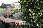 Foto: VidiPhoto<br /> <br /> DE STEEG &ndash; De buxusmot bezorgt kasteeltuinbaas Paul Klein-Gunnewieck niet alleen hoofdbrekens, maar ook handenvol werk. In de tuin van kasteel Middachten in De Steeg bij Arnhem staat 875 vierkante meter aan buxushagen, naast tal van buxusstruiken. Een paar honderd verschillende soorten, volgens Klein-Gunnewieck. De oudste buxus dateert van 1909 en is boomdik. Bovendien wordt op een gravure van 1724 al duidelijk dat Middachten en buxushagen nauw verweven zijn met elkaar. Het verwijderen van de buxus om de schadelijke buxusrups cq. &ndash;mot te elimineren is daarom geen optie. Biologische bestrijding wel, terwijl daarnaast aangetaste struiken volledig worden teruggesnoeid tot hun naakte bestaan, in de hoop dat ze straks weer &lsquo;schoon&rsquo; uitgroeien. De struiken en hagen van Middachten zijn dit jaar voor het eerst behandeld met aaltjes (biologisch). Door dat vijfmaal per jaar te doen, blijft de rupsenplaag enigszins onder controle. Probleem is dat de buxusmot driemaal per jaar een cyclus heeft en er uit de eitjes rupsen kruipen. Voor buxusliefhebbers gloort enig licht aan de horizon. In Belgi&euml; wordt gewerkt aan een resistente buxus.
