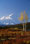Fall landscape, Denali National Park, Alaska