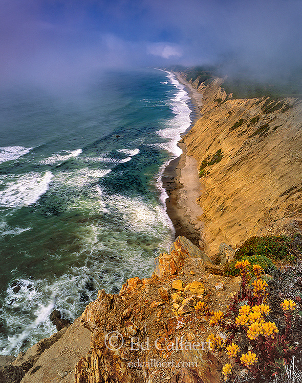 Wildcat Beach, Burton Wilderness, Point Reyes National Seashore; California; Marin County California