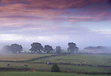 15/08/14 <br /> <br /> A misty late summer purple dawn breaks over farmland near Sparrowpit in the Derbyshire Peak District.<br /> <br /> All Rights Reserved: F Stop Press Ltd. +44(0)1335 300098   www.fstoppress.com.