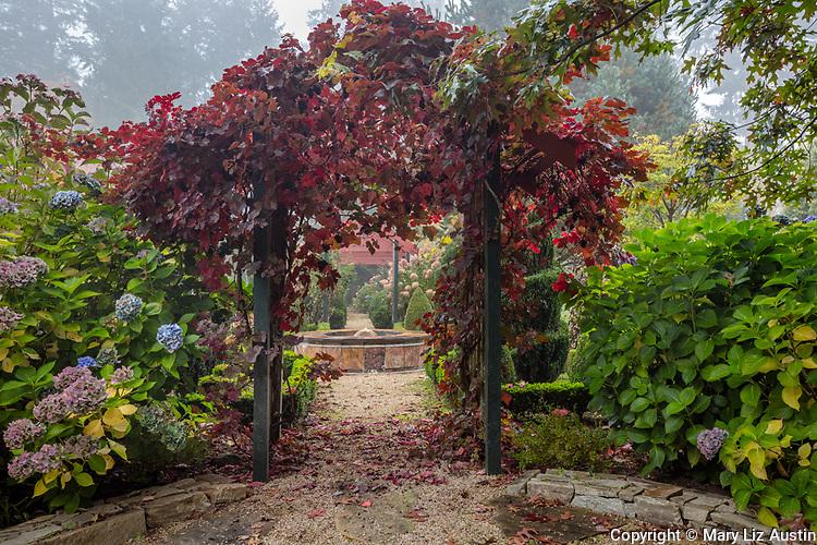 Vashon Island, Washington: Walkway with grape covered arbor and hydrangeas