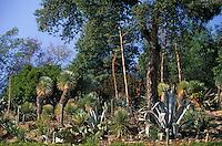 Europe/Provence-Alpes-Côte d'Azur/83/Var/Rayol-Canadel-sur-Mer: Jardin du domaine du Rayol - Détail yuccas au conservatoire du littoral