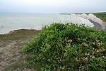 England ,East Sussex,Beachy Head,Birling Gap