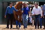 """ARCADIA, CA  JUNE 23: Justify and exercise rider Humberto Gomez, groom Eduardo Luna  enter the track in front of the fans on """"Justify Day"""" on June 23, 2018 at Santa Anita Park in Arcadia, CA.  (Photo by Casey Phillips/Eclipse Sportswire/Getty Images)"""