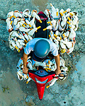 "Dozens of ducks stick their heads out out of carrier bags on the back of a scooter. Photographer Olivier Apicella capture the shot with his drone as they were transported to a local market in Ben Tre, Mekong Delta, Vietnam.<br /> <br /> The french photographer said ""The ducks were being transported to the main market  around 6 miles away, where they will be sold as food."" <br /> <br /> 'There were over 60 ducks squashed in carrier bags on the back of the Honda 125cc scooter, which has been modified to carry these ducks."" <br /> <br /> The 36-year-old from Marseille said ""I managed to get the shot as the driver slowed down to stop at a red light on the road."" <br /> <br /> Please byline: Olivier Apicella/Solent News<br /> <br /> © Olivier Apicella/Solent News & Photo Agency<br /> UK +44 (0) 2380 458800"