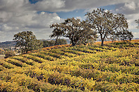 Lush foliage and trees are abundant in Paso Robles wine country in California