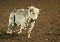 PRCA Bulls