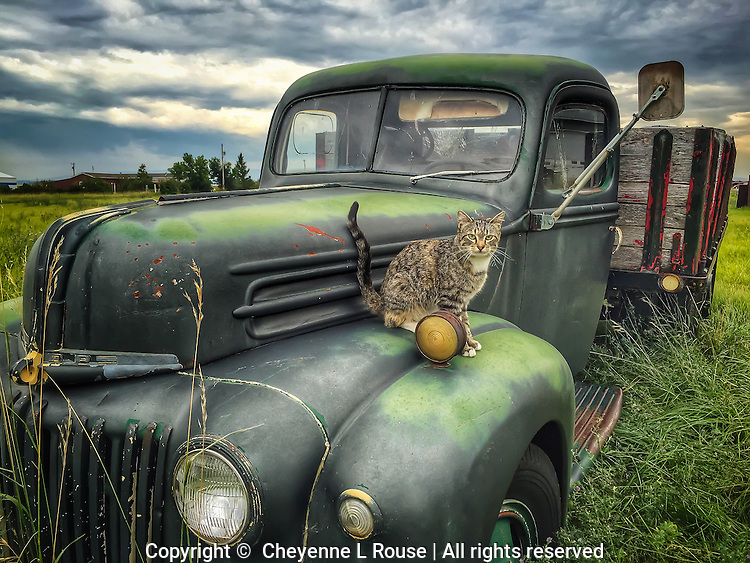 (i) Feline Ford - Montana *This photo was shot with an iphone 6 and should not be printed larger than 16x24