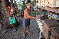 Brazil, State of Pará, near Bragança. Mr. Roque, 68 years old and a beekeeping farmer, keeps twenty hives of Melipona fasciculata bees with the help of Professor Giorgio Venturieri who monitors the upkeep of this model meliponary.