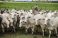 Criação de gado de corte fazenda Três Marias ( grupo Lider ) .<br /> Castanhal, Pará, Brasil.<br /> Foto Carlos Borges<br /> 2016