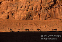 Wild horses in Monument Valley, Navajo indian reservation. Wild Horse Photography by western photographer Jess Lee. Pictures of mustangs in the West. Fine art images,Prints,photos Wild horse photo,wildhorses in the american west,