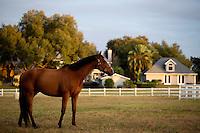 PIC_1723-BG OCALA HOUSE FLORIDA PR