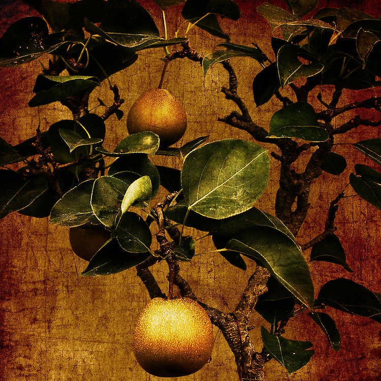 A bonsai pear tree with two fruit against a rich, gold craquelure background.
