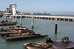CA sea lions at Pier 39 wharf