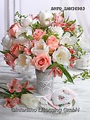 Alfredo, FLOWERS, BLUMEN, FLORES, photos+++++,BRTOLMN36983,#f#, EVERYDAY