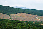 African Oil Palm (Elaeis guineensis) plantations and clear cut for new planting, Sabah, Borneo, Malaysia