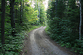 Gravel road in forest