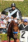 Capo Bastone walking in the paddock at Del Mar Race Course in Del Mar, California on August 4, 2012.