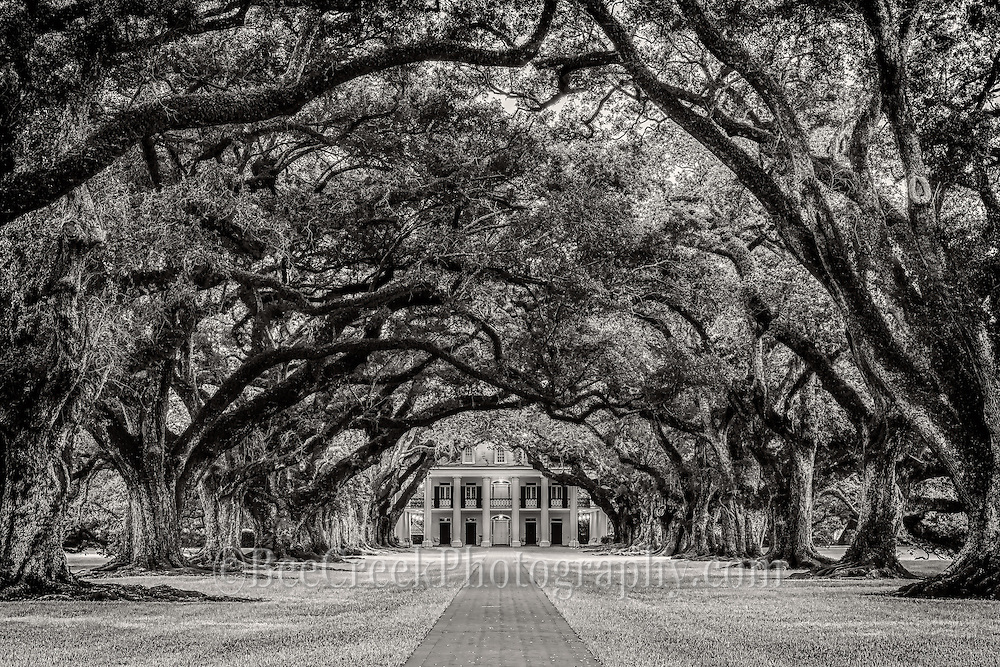 Oak Alley in black and white.  These lovely old oaks create a canopy over the path to the mansion.