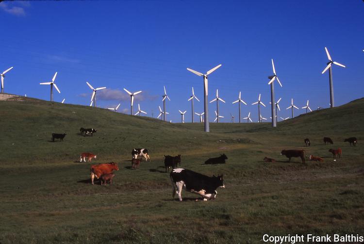 cattle & windmills, Alameda County