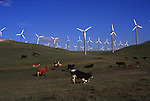 cattle & windmills, Alameda County