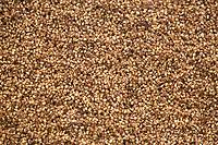 Brewers grains<br /> Picture Tim Scrivener 07850 303986<br /> &hellip;.covering agriculture in the UK&hellip;.