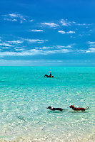 Horse riders in water with dogs. Providenciales. Turks and Caicos.