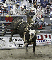 29 August 2004: Bull Rider Hayden Reece rides the bull Jose during the PRCA 2004 Extreme Bulls competition in Bremerton, WA.